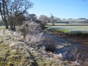 Frosted river bank