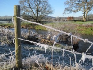 Frosted barbed wire